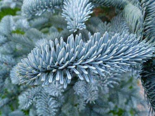 Weihnachten – verspielt und undogmatisch